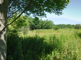 Quiet, Peaceful Setting - Large Residential Lot