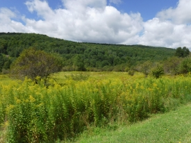 BEAUTIFUL ACREAGE IN THE CATSKILLS - Beautiful Views
