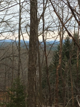 6.12 Mostly Wooded Acres - 6.12 Mostly Wooded Acres